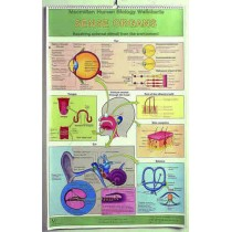 Simple Anatomy Flip Chart