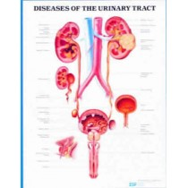 Diseases Of Urinary Tract