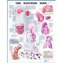 The Maturing Body Chart