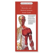 Muscular and Skeletal Systems Study Guide