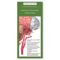 Anatomy of the Brain Study Guide