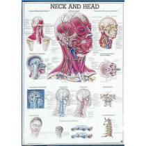 The Head And Neck Chart