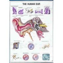 The Human Ear Chart