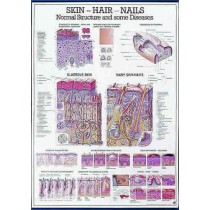 Skin, Hair, Nails Chart