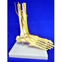 Neuro Foot