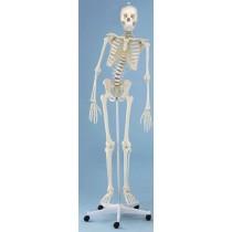 Therapy Skeleton