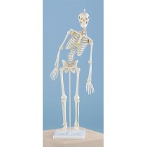 Miniature Skeleton, Flexible Spine