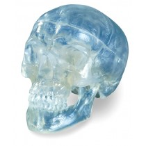 3-Part Skull, Transparent, Life-Size