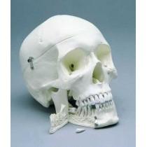 Skull 4-Part Special