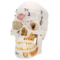 Skull 10 Part Special