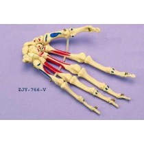 Hand Articulated Coloured