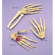 Hand Articulated Loosely