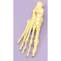 Foot Articulated