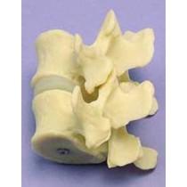 Vertebral Joint