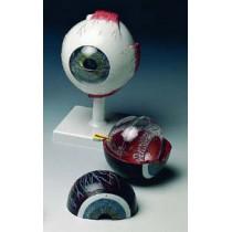 Eyeball 6 Part, X5