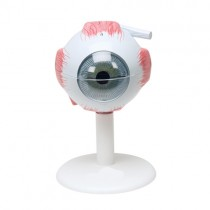 Eyeball 6 Part, X3
