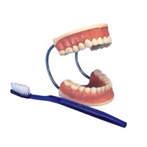 Tooth Care Model With Brush