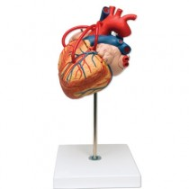 Heart X2 With Bypass, 4 Parts