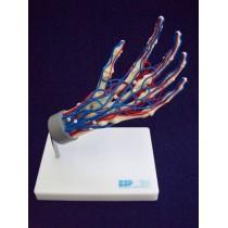 Vascular Hand