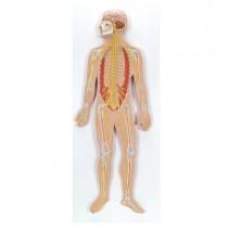 Nervous System 1/2 Size